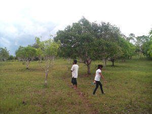 orchard-pic2
