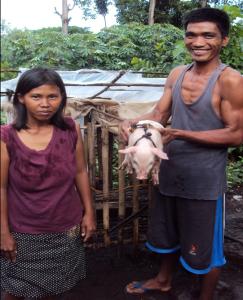 Livelihood Program - Piglet Distribution